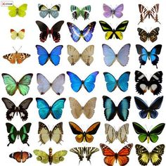 A zebra's stripes, a seashell's spirals, a butterfly's wings: these are all examples of patterns in nature. How does the delicate design of a butterfly's wings come. Butterfly Images, Monarch Butterfly, Butterfly Wings, Butterfly Kisses, Borboleta Tattoo, Most Beautiful Butterfly, Types Of Butterflies, Butterfly Species, Butterfly Pattern