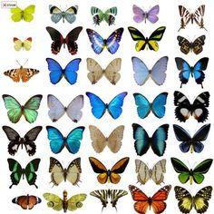 Papillons Tatouages, Conception de papillons, des papillons, des papillons sont Meilleurs Tatouages, images de papillon, papillons, papillon Gale ...