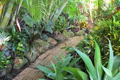 small path winding through a tranquil tropical garden.