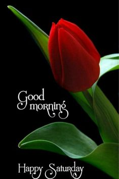 Saturday Images, Good Morning Happy Saturday, Morning Quotes, Beautiful Flowers, Blessed, Blessings, Allah, David, Life