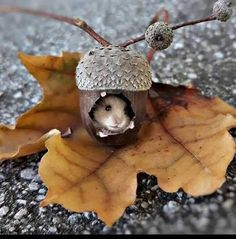 This too cute to be real - Animals wild, Animals cutest, Animals funny, Animals drawings Cute Little Animals, Cute Funny Animals, Funny Cute, Cute Creatures, Beautiful Creatures, Animals Beautiful, Nature Animals, Animals And Pets, Autumn Animals