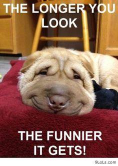 Funny dog http://9lols.com/funny-dog/