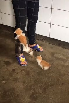 So many cute kittens videos compilation 2018 · Funny Videos Cute Kittens, Cute Kitten Gif, Fluffy Kittens, Ragdoll Kittens, Kittens Meowing, Cute Funny Animals, Cute Baby Animals, Funny Cats, Funny Humor