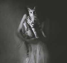 "/ Photo ""le portrait du chat"" by Victoria Audouard Victoria, French Photographers, Wonderful Picture, Life Photography, Black And White Photography, Cat Lovers, Cool Photos, Romantic, Deviantart"