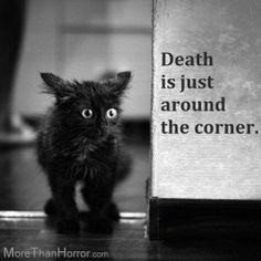 Horror Black Cat Humor