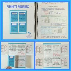 Teach your students how to construct and understand Punnett squares with this activity found inside my Genetics: The Study of Heredity - Life Science Interactive Notebook. Your students will also learn the following concepts in a fun and engaging way! •