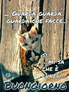#link #buongiorno #divertenti #immagini #cat #buon #lunedi #inizio #settimana #post #page #facebook #Tiziana #Mosso #frasi #aforismi #citazioni #pensieri #proverbi