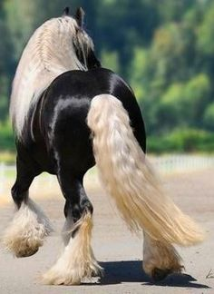 beautiful! these kinds of horses will be at my barn.