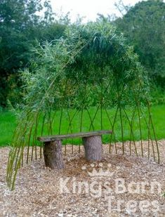 Living willow arbour