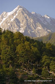 String of buddhist prayer flags and Dhauladhar snow mountain range near Dharamsala Himachal Pradesh India