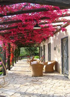 bougainvillea on pergola Pergola Patio, Backyard Patio, Backyard Landscaping, Pergola Kits, Pergola Ideas, Patio Ideas, Cheap Pergola, Wedding Pergola, Vinyl Pergola