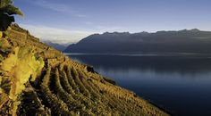 This view can be glimpsed on a great tour in Switzerland that takes in the Lavaux Area - hiking, luxury shopping, spa and gastronomy are all on the menu as you discover the hidden delights of this beautiful wine region.