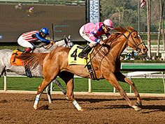 Sam's Sister came running off the turn and wore down front-runner Sweet Marini to win in the $200,000 Santa Monica Stakes (gr. II), her second straight graded stakes victory, Jan. 19, 2015 at Santa Anita Park.
