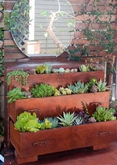 Recycled dresser with greens - perfect for your indoor or outdoor affair! #gardening @Cara K K K Cooper, I can see you doing this