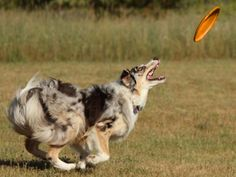 The Best Dog Toys are Durable Dog Toys by Ruff Dog