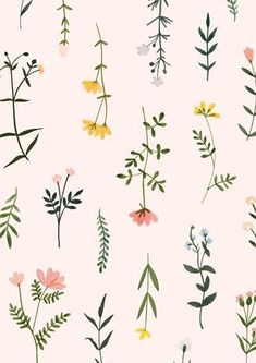 Botanical clipart wildflower hand drawn floral watercolor png flowers floral clip art illustration plant flower twig wedding elegant – All For Garden Art And Illustration, Pattern Illustration, Botanical Illustration, Art Illustrations, Watercolor Illustration, Illustration Inspiration, Wedding Illustration, Flowers Wallpaper, Trendy Wallpaper