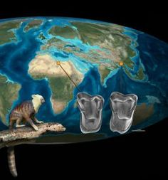 Fossil discovery: More evidence for Asia, not Africa, as the source of earliest anthropoid primates -- very comprehensive article