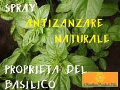 Spray ANTIZANZARE NATURALE con BASILICO e MENTA- Proprietà del basilico