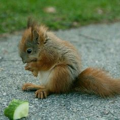 Baby Squirrel, where is your Mommy? Cute Funny Animals, Cute Baby Animals, Animals And Pets, Wild Animals, Cute Squirrel, Baby Squirrel, Squirrels, Woodland Creatures, Cute Creatures