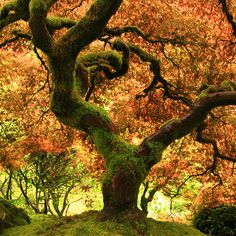 Oregon Japanese Garden- Fall Tree Photo