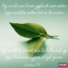 Jeremia 17:8