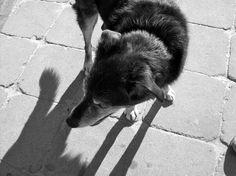 P-Town Pup.