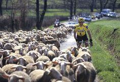 Fun, fun, fun..! Cycling