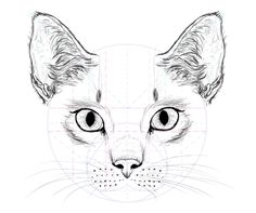 Cats rule the Internet! No doubt one day they'll take complete control over our lives. To prepare for this day we need to know the enemy. By drawing a cat you'll understand what they really are made of. So, grab a pencil and I'll show you what cats are made of! | Tags: Drawing, Vector