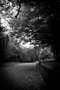 ☾ Midnight Dreams ☽ dreamy & dramatic black and white photography - park at night