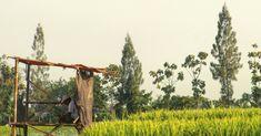 Yakinkan diri selalu bersyukur dengan apa yang diberi.  #agrarian #rice #cote #farmers #plant #field #klaten #dolanklaten #klatenphotograph #exploreklaten #trip #adventure #photooftheday #streetphotography #nature #photography