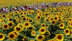 Nearly time for Le Tour again!