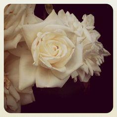 White Rose - Eternal love, silence or innocence, wistfulness, virtue, purity, secrecy