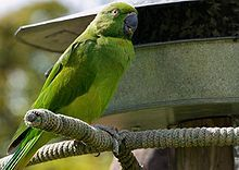 List of birds of Mauritius - Wikipedia