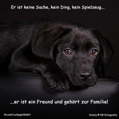 #Luckypet #Spruch #Zitat #Hund