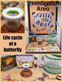 Area - life cycle of a butterfly. Investigation Area - life cycle of a butterfly., My Favorite,Investigation Area - life cycle of a butterfly., My Favorite, Science Area, Primary Science, Kindergarten Science, Preschool Classroom, Teaching Science, Science And Nature, Science Table, Eyfs Activities, Science Activities