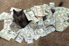cat buried in money. catsandmoney.com