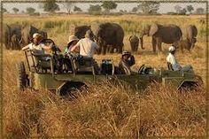 Safari through The Chobe National Park, Botswana Places To Travel, Places To Go, Travel Destinations, Chobe National Park, Safari Holidays, Kenya Travel, Tanzania Safari, Private Games, Good Day Song