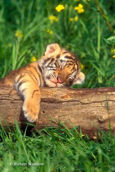 a nap in the warm sun on a sunny spring afternoon . . .don't you wish you could do that?