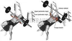 Comment effectuer le Développé couché barre prise serré - triceps