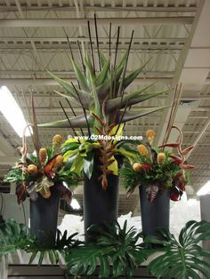 Large-scale tropical display in zinc urns. Designed by: Christine McCaffery http://c2mdesigns.com