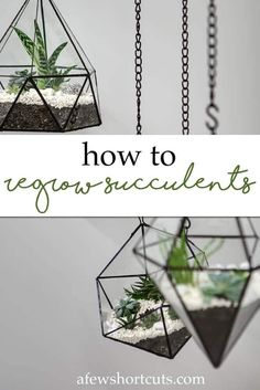 If you love succulents, give these tips for regrowing succulents a try. It is simple to regrow succulents! They are a great way to get more of these gorgeous plants for less, and even develop a little hobby for yourself.