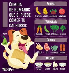 qué puede comer mi perro Love Pet, I Love Dogs, Animals And Pets, Cute Animals, Mocca, Homemade Dog Food, Dog Care, My Animal, Pet Shop