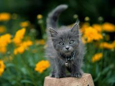 cute female kitten names   Cute Cats Pictures