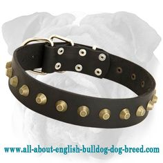 Perfect #Leather #English #Bulldog #Collar Decorated with Studs $34.90 | www.all-about-english-bulldog-dog-breed.com