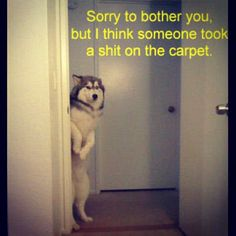 #dog  #shit  #hilarious  #dogmeme  #lol  www.anilols.co.uk for more funny animals #cats