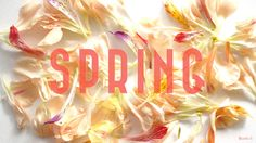 Bluette. » Free Wallpapers Spring © 2014 Bluette.fr