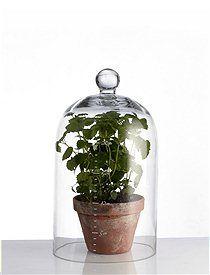 Glasglocke Diese formschönen, schlichte Glasglocke ist vielseitig einsetzbar...ob nun für Lebensmittel oder zweckentfremdet für kleine Sammlungen... ganz egal. Besonders niedlich die cm Angaben als Maßeinheit.