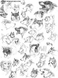 Dog Head Studies by *screwbald on deviantART