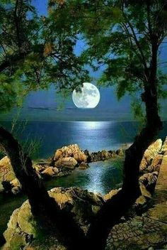 Moonlight thru the trees Beautiful Nature Pictures, Beautiful Nature Wallpaper, Beautiful Moon, Amazing Nature, Nature Photos, Beautiful Landscapes, Beautiful World, Beautiful Places, Moon Photography