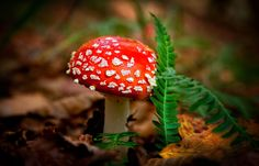 Mushroom by Vasja Pinzovski, via 500px